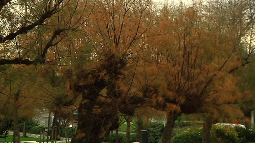 Alerta roja por vientos de hasta 140km/h [1:48]