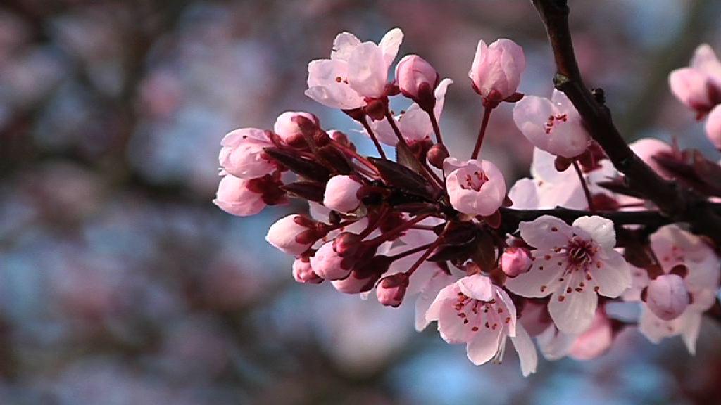Se acerca una primavera cálida, tormentosa y leve para los alérgicos [2:03]