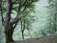 sistema_forestal.jpg