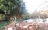URA planta 11.500 árboles en las riberas de  los ríos de la CAPV en invierno 2013-2014