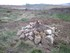 6/anfibios/n70/refugio con tecnica pilas de piedra