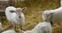 Los 270 alumnos y alumnas que han pasado por Artzain Eskola garantizan el futuro del pastoreo en Euskadi