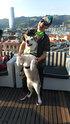 """Euskadi apuesta por el turismo con mascotas con la campaña """"Euskadi con perro"""""""