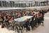 Eskola Hiztun Bila jardunaldiak ikastetxeetako hizkuntza normalkuntzako 400 teknikari elkartu ditu Gasteizen