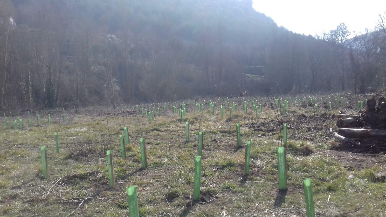 landaketa_plantacion_2.jpg