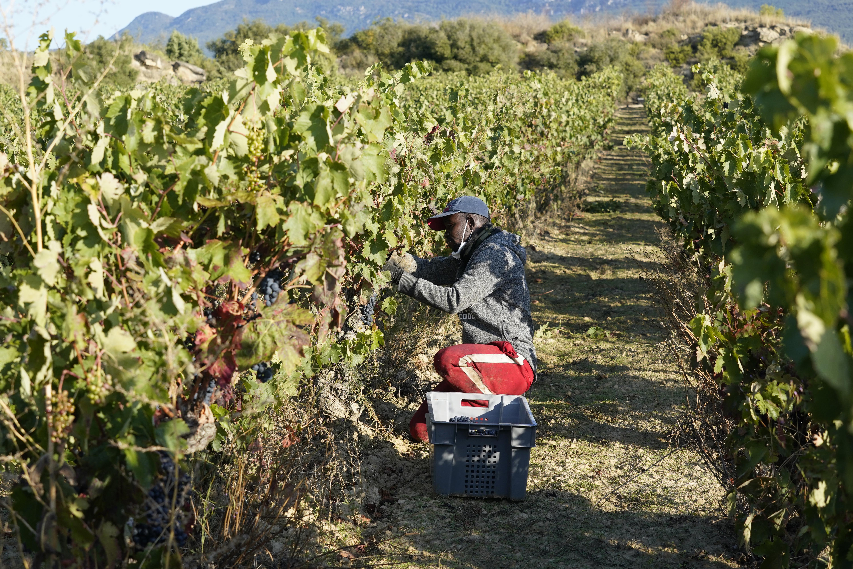 La_consejera_de_Desarrollo_Econ_mico__Sostenibilidad_y_Medio_Ambiente__Arantxa_Tapia__visita_la_Rioja_alavesa_con_motivo_de_la_campa_a_de_la_vendimia20200929_5313.jpg