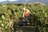 La_consejera_de_Desarrollo_Econ_mico__Sostenibilidad_y_Medio_Ambiente__Arantxa_Tapia__visita_la_Rioja_alavesa_con_motivo_de_la_campa_a_de_la_vendimia20200929_5279.jpg