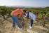 La_consejera_de_Desarrollo_Econ_mico__Sostenibilidad_y_Medio_Ambiente__Arantxa_Tapia__visita_la_Rioja_alavesa_con_motivo_de_la_campa_a_de_la_vendimia20200929_5394.jpg
