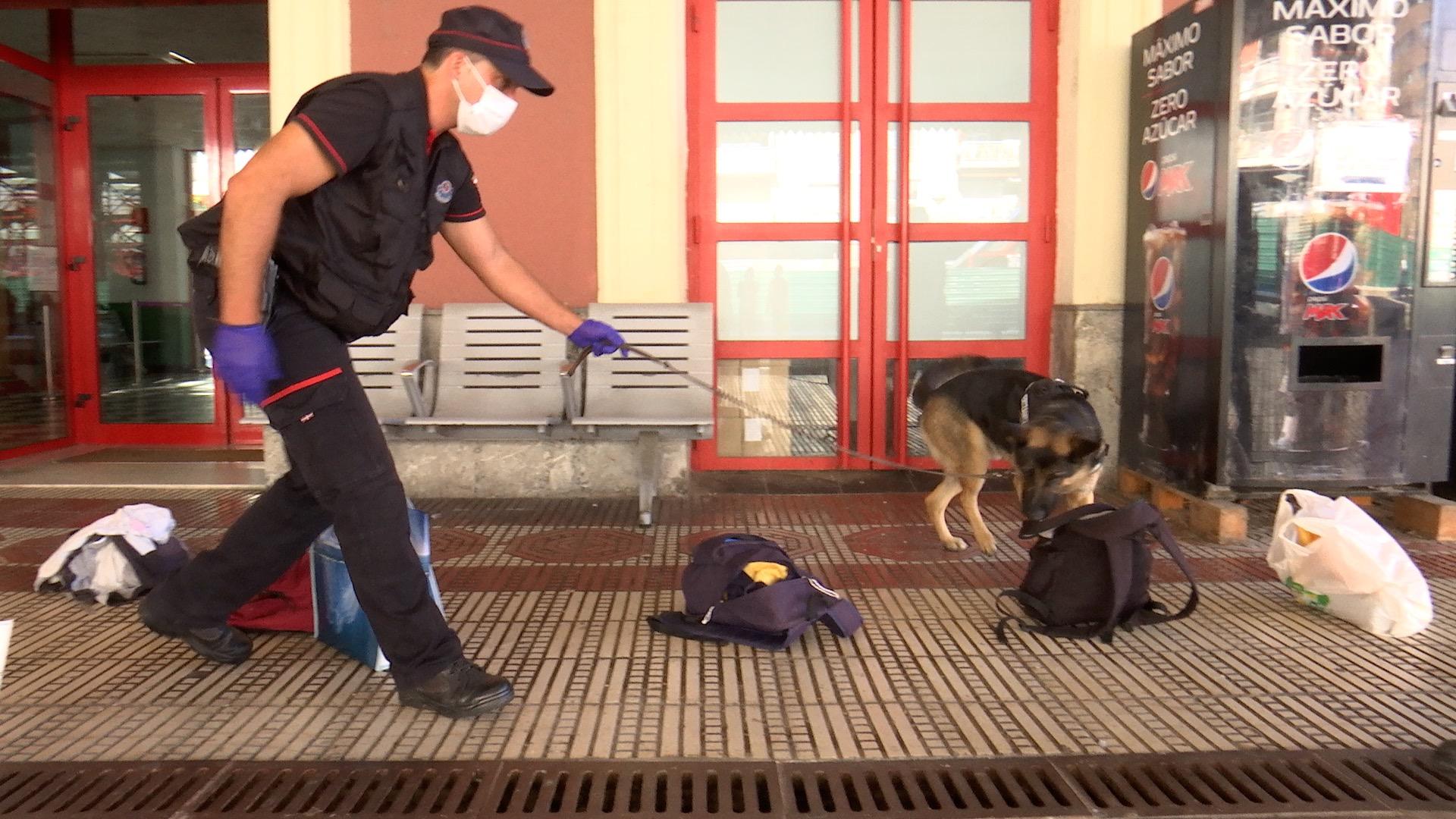 Caninos_Donostia_06.jpg